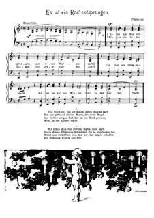 Es ist ein Ros entsprungen: Für Stimme und Klavier by Michael Praetorius