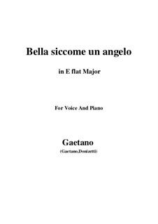 Don Pasquale: Bella siccome un angelo (E flat Major) by Gaetano Donizetti