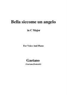 Don Pasquale: Bella siccome un angelo (C Major) by Gaetano Donizetti