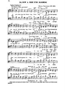 Es ist ein Ros entsprungen: Singpartitur (Englischer Text) by Michael Praetorius