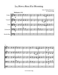 Lo, How a Rose E'er Blooming: Para quinteto de cordas by Michael Praetorius