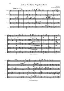 Alleluia - Ave Maria - Virga Jesse floruit: For string quintet (2 violins, 2 violas, 1 cello) by William Byrd