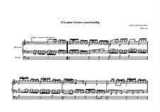 O Lamm Gottes, unschuldig, BWV 618: O Lamm Gottes, unschuldig by Johann Sebastian Bach